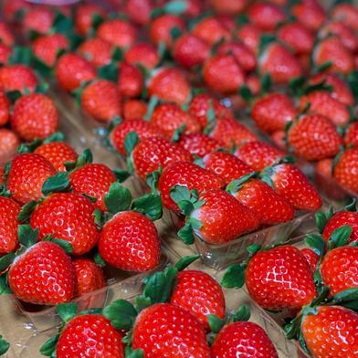 いちごさん、さがほのか食べ比べパック 270g×4パック 果物(いちご) 通販