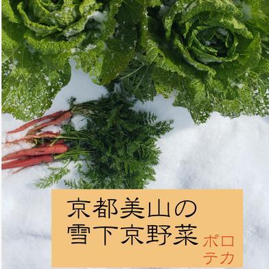 どっさり!雪下京野菜セット!【100サイズ】 白菜、金時人参、大根などの京野菜 京都府 通販