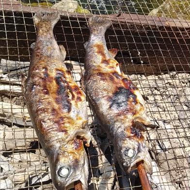 ニジマス約2kg  冷凍 1kg(8~12匹入) ×2  内臓処理前の重量で1kg。実際は930g程度以上となります。 魚介類(川魚) 通販