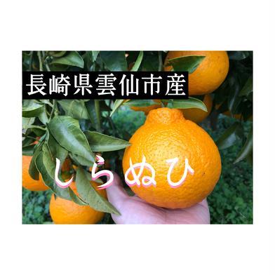 しらぬひ 長崎県雲仙市産(約2kg) 約2kg(3L・4Lサイズ6玉入り) 果物(柑橘類) 通販