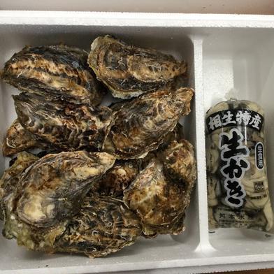 兵庫県相生産 生牡蠣殻付き2キロ 剥き身500g ナイフ付き 殻付き2キロ 剥き身500g 兵庫県 通販