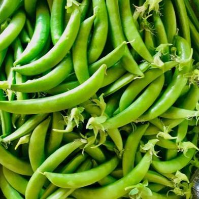 甘さはじける!スナップエンドウ 無選別品 1キロ 1キロ 果物や野菜などの宅配食材通販産地直送アウル