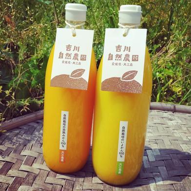 【飲み比べセット】無添加柑橘ジュース 1000ml×4本(温州みかんジュースと伊予柑ジュース各2本ずつ) 飲料(ジュース) 通販