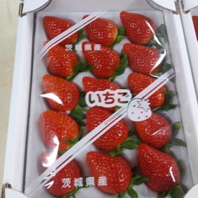クール便 大玉イチゴ 朝採り2品種 800g 果物(いちご) 通販
