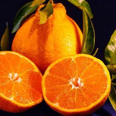 不知火(肥の豊) 家庭用 約5kg 約5kg 果物(柑橘類) 通販
