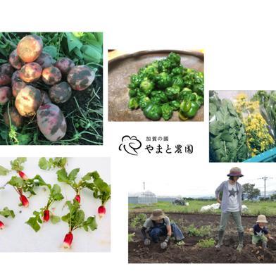 【20セット限定】春を感じる旬野菜セット(レシピ付!) 4-5品 キーワード: JAS 通販