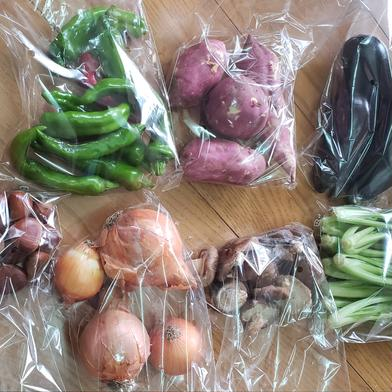 どかっ❗と京野菜詰め込みセット 100サイズ 京都府 通販