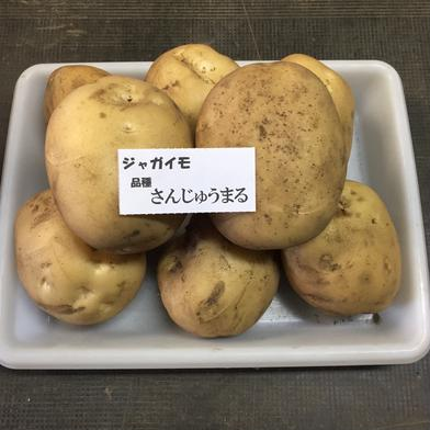 じゃがいも さんじゅう丸 2kg 神奈川県 通販