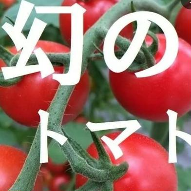 【2000g】名古屋の《極甘》有機栽培ミニトマト【飯田農園】幻のmiuトマト 2000g(500g×4パック) キーワード: JAS 通販