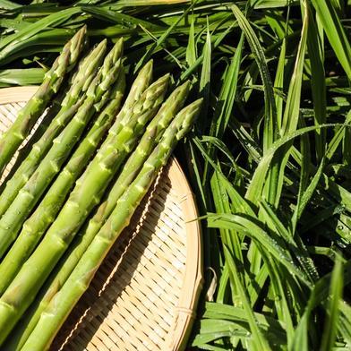 🌳🌳さぬきのめざめ2L  2kg 👑最高級王様アスパラガス👑 おおもりや2Lサイズ 2kg 野菜(アスパラガス) 通販