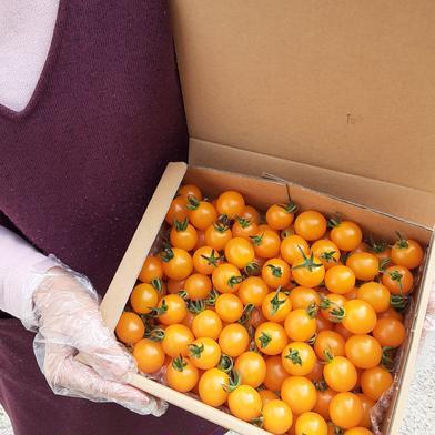宮島農園🍅黄色いミニトマト 1kg 野菜(トマト) 通販