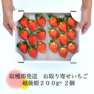 越後姫400g(200g✖️2つ) 400g 果物(いちご) 通販