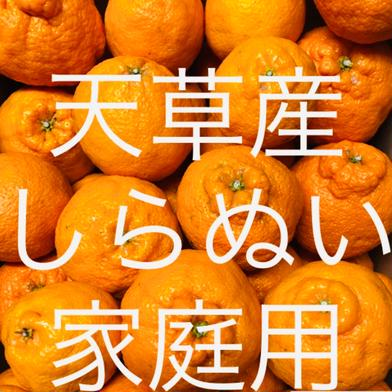 不知火 家庭用 2kg  箱込2kg  果物(柑橘類) 通販