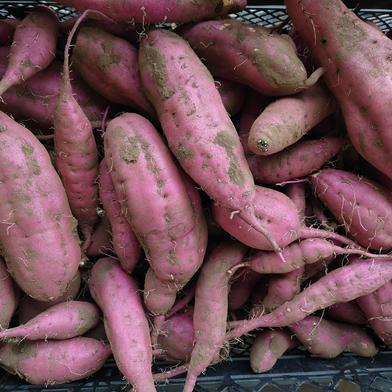 さつまいも3品種セット(貯蔵前)各1kg 3kg 野菜(さつまいも) 通販