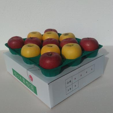 サンふじ&シナノゴールド5kg【スマートフレッシュ】 約5kg(13~18玉) 果物や野菜などの宅配食材通販産地直送アウル