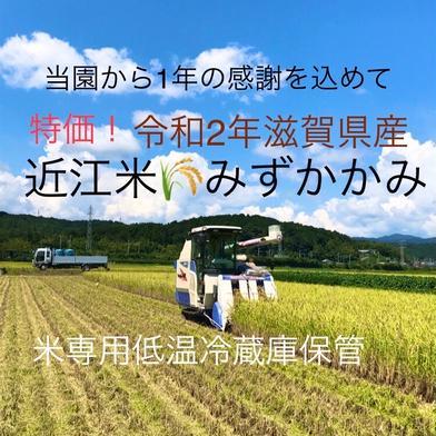 令和2年 滋賀県産みずかがみ白米約10㌔リサイクル箱 約10㌔(送らせていただく箱込みになります) 滋賀県 通販