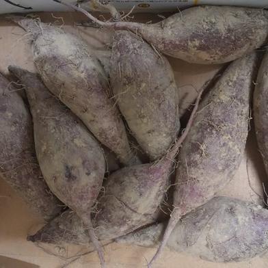 国境の島からお届け野菜 さつまいも すずほっくり 2kg 長崎県 通販