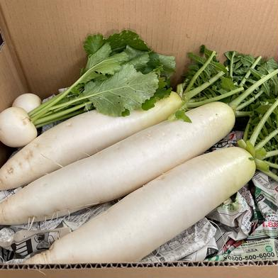 星イズ農園のしろくび大根3本入り(3.3Kg)+今だけ小かぶ150g分おまけ! 約3.3kg 果物や野菜などの宅配食材通販産地直送アウル