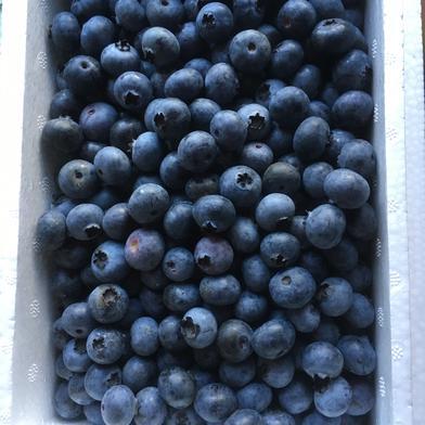 GOGOGO欲張り三昧!ブルーベリー500gアスパラM以上500gブルーベリーコンフィチュール一瓶 1.2kg 果物や野菜などの宅配食材通販産地直送アウル