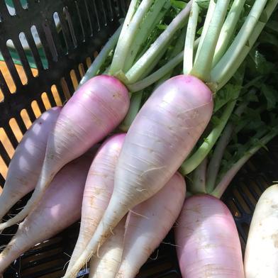 Kさま専用 葉付きあやめっ娘・葉付きあやめ雪カブ5kgセット 5kg 果物や野菜などの宅配食材通販産地直送アウル