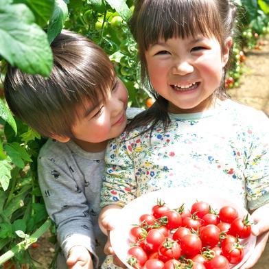 濃厚ミニトマト 900g 900g(75~100個) 野菜(トマト) 通販