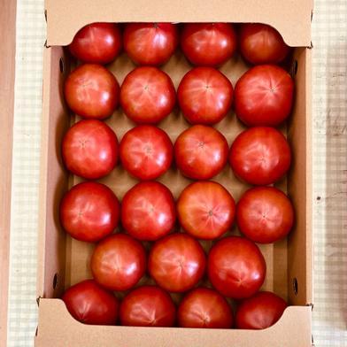 ご好評! 山口秋穂トマト(4kg箱満杯) 1箱 山口秋穂トマト(4kg箱満杯) 1箱 野菜(トマト) 通販