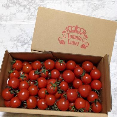 『ニーゴ25。』 1.6キロ 野菜(トマト) 通販