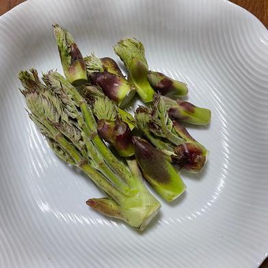 天ぷらの定番山菜 5種「タラの芽、コシアブラ、山ウド、こごみ、アケビの新芽」 2キロ以内 果物や野菜などの宅配食材通販産地直送アウル