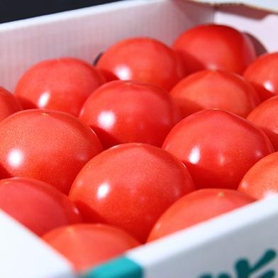 ソムリエトマト 4kg ソムリエトマト 4〜5kg 野菜(トマト) 通販