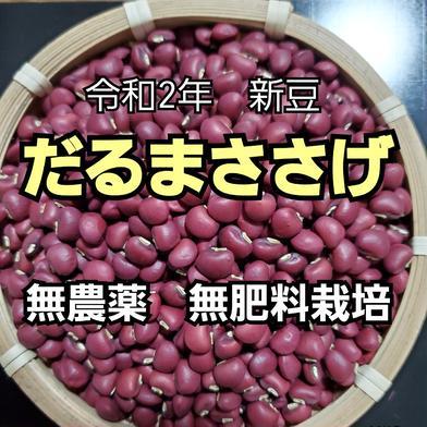 新豆だるまささげ500g 無農薬 無肥料                                              500g 野菜(豆類) 通販