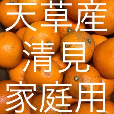 清見 家庭用 15kg 箱込15kg 果物(柑橘類) 通販