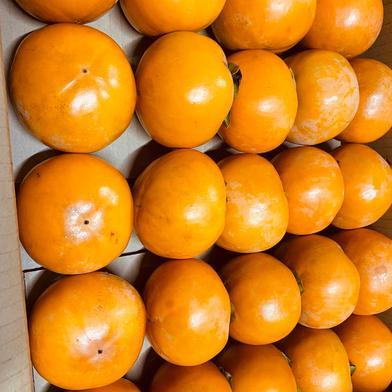 ご家庭用富有柿Mサイズ20個 4kg 岐阜県 通販