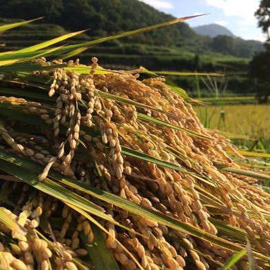 小豆島肥土山産新米!!2kg+おまけ付き 2kg+おまけ 香川県 通販