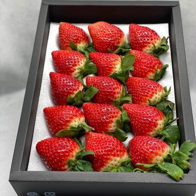 大粒さがほのかギフト♡18〜12粒 1箱(約450g) 果物(いちご) 通販