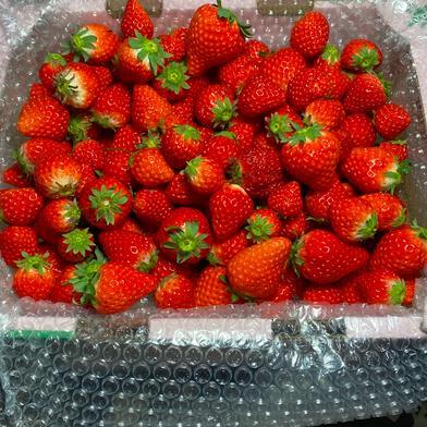 ジャム用いちごさん2kg(潰れが気にならない方限定!) 2kg 果物(いちご) 通販