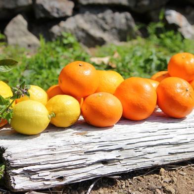 主井農園 季節のこだわりみのりセット5kg 5kg 果物(柑橘類) 通販