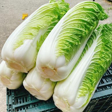 のぐちファーム安曇野産☆白菜2こセット のぐちファーム