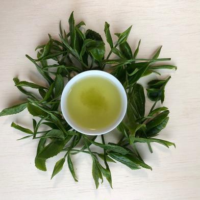 有機JAS 静岡本山茶100g✖️3本 100g✖️3本 静岡県 通販