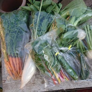 お野菜boxSサイズ 7品から8品 愛知県 通販