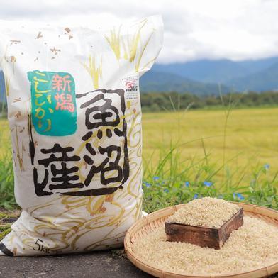 うちやま農園のお米 5㎏(玄米) 5㎏ うちやま農園