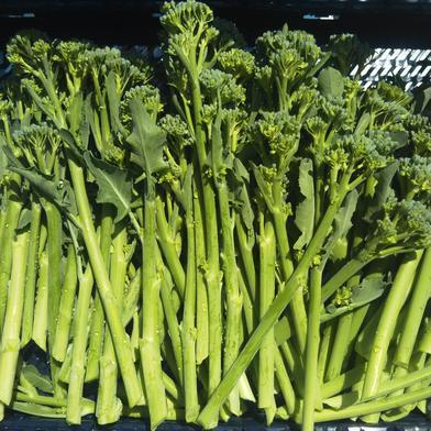 茎ブロッコリー スティックセニョール 1.5kg 果物や野菜などの宅配食材通販産地直送アウル