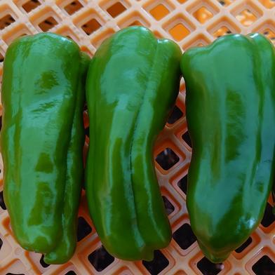 ひまり農園のピーマン1kg 1kg 野菜(その他野菜) 通販