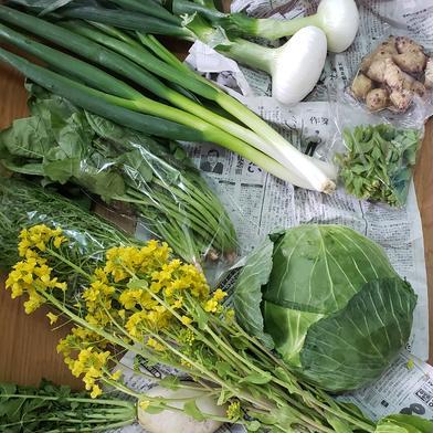 春の京野菜病みつきセット!!100サイズ 10キロ以下 100サイズ 食材ジャンル: 野菜 > セット・詰め合わせ 通販