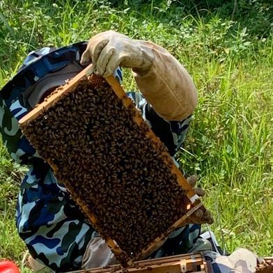 Bitter Honey  200グラム はちみつ 通販