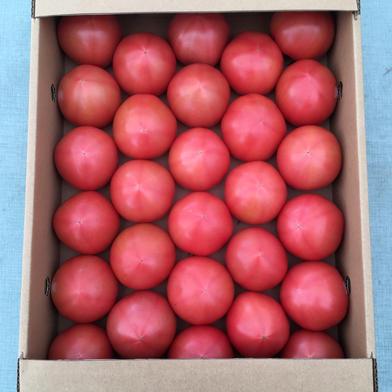 【A品】赤採りトマト1箱(4kg箱満杯) 1箱(4kg箱満杯) くるるんトマトファーム龍農園