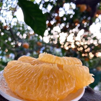 3.5kg 紅八朔【べにはっさく】 3.5kg 果物(柑橘類) 通販