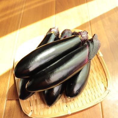 ハウスで柔らか栽培! トロ~リ長ナス☆ 約1kg(6-8本) 野菜(茄子) 通販