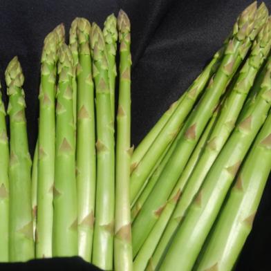【収穫当日発送】阿部農園の朝採り春アスパラ Lサイズ 約1kg 野菜(アスパラガス) 通販
