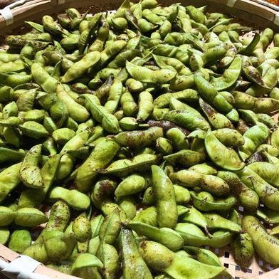 令和2年産京都丹波黒豆枝豆莢取り3kg(500g×6袋) 3kg 野菜(豆類) 通販