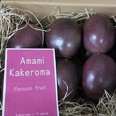 農薬不使用 南の島のパッションフルーツミニギフト 6玉 果物(その他果物) 通販